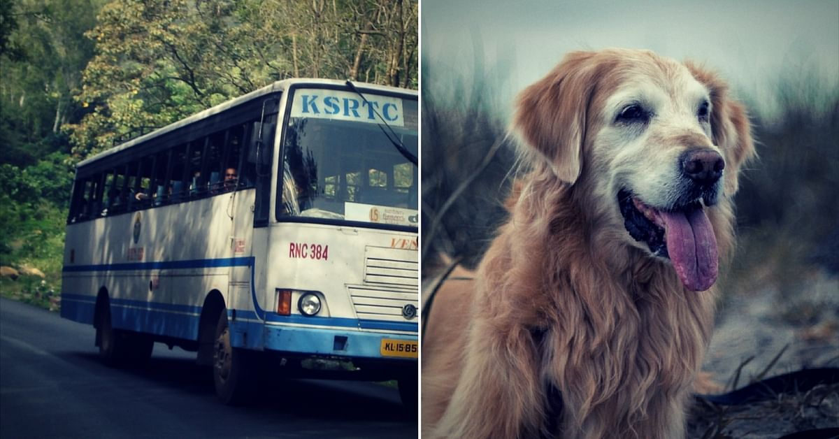 The Next Time You Board a KSRTC State Bus, Take Your Pet Along!