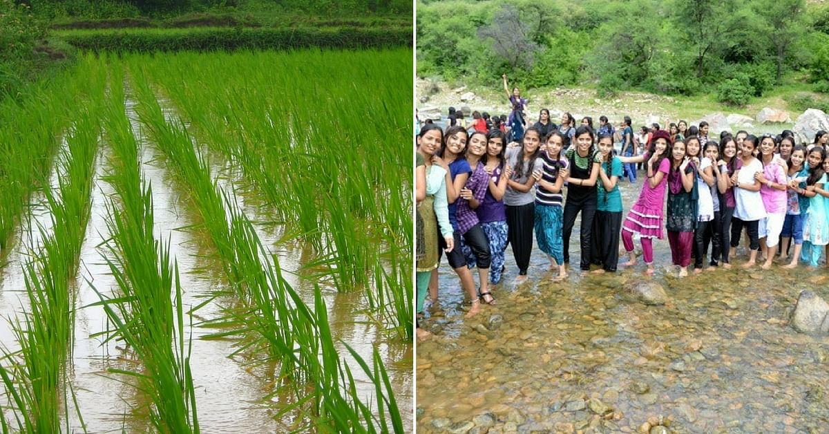 The Mangaluru students had an enriching experience, cultivating and harvesting their own rice.Representative image only. Image Courtesy: Wikimedia Commons