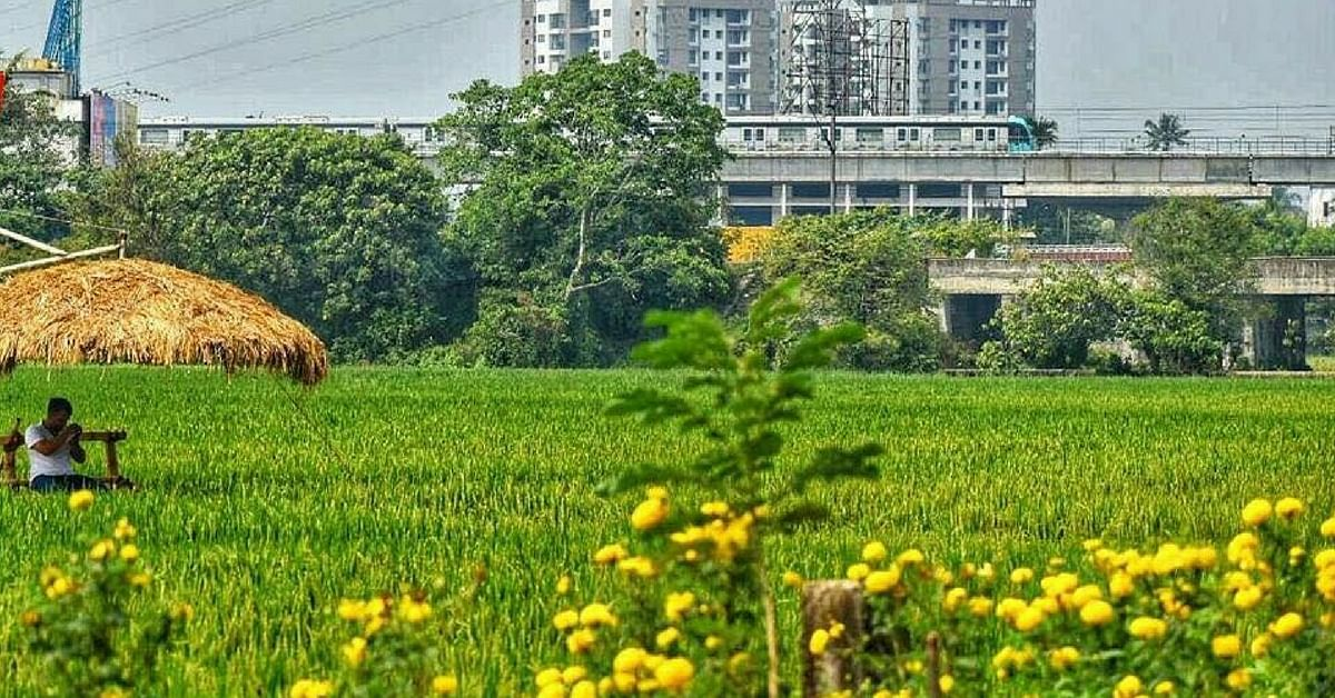 Determination Can Change All! Villagers Transform Dumpyard into Paddy Field