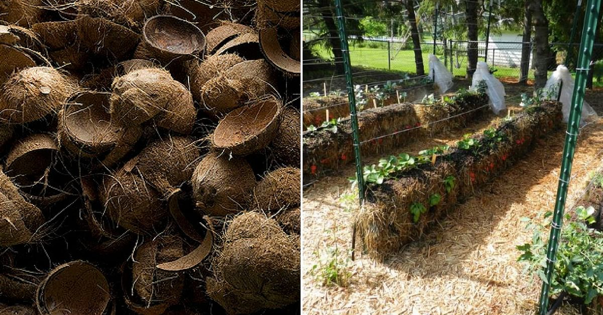 Coconut Husks, Sand, and More: All You Need to Create a Soil-less Garden!