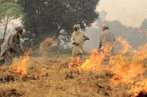 Crop burning. For representational purposes only. (Source: Wikimedia Commons)