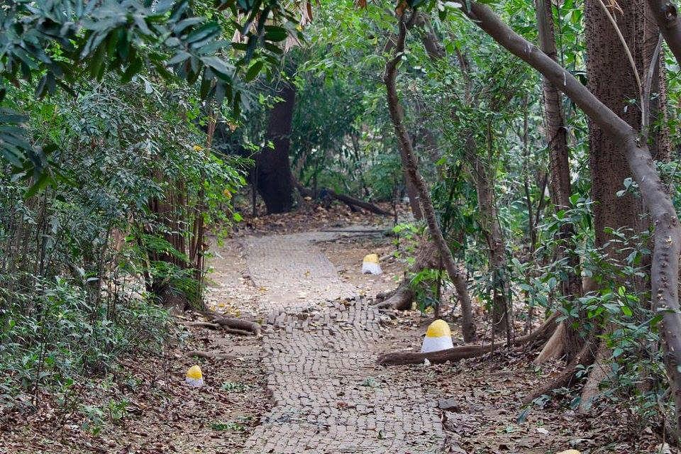 Maharashtra Mahim Nature Park Mumbai (1)