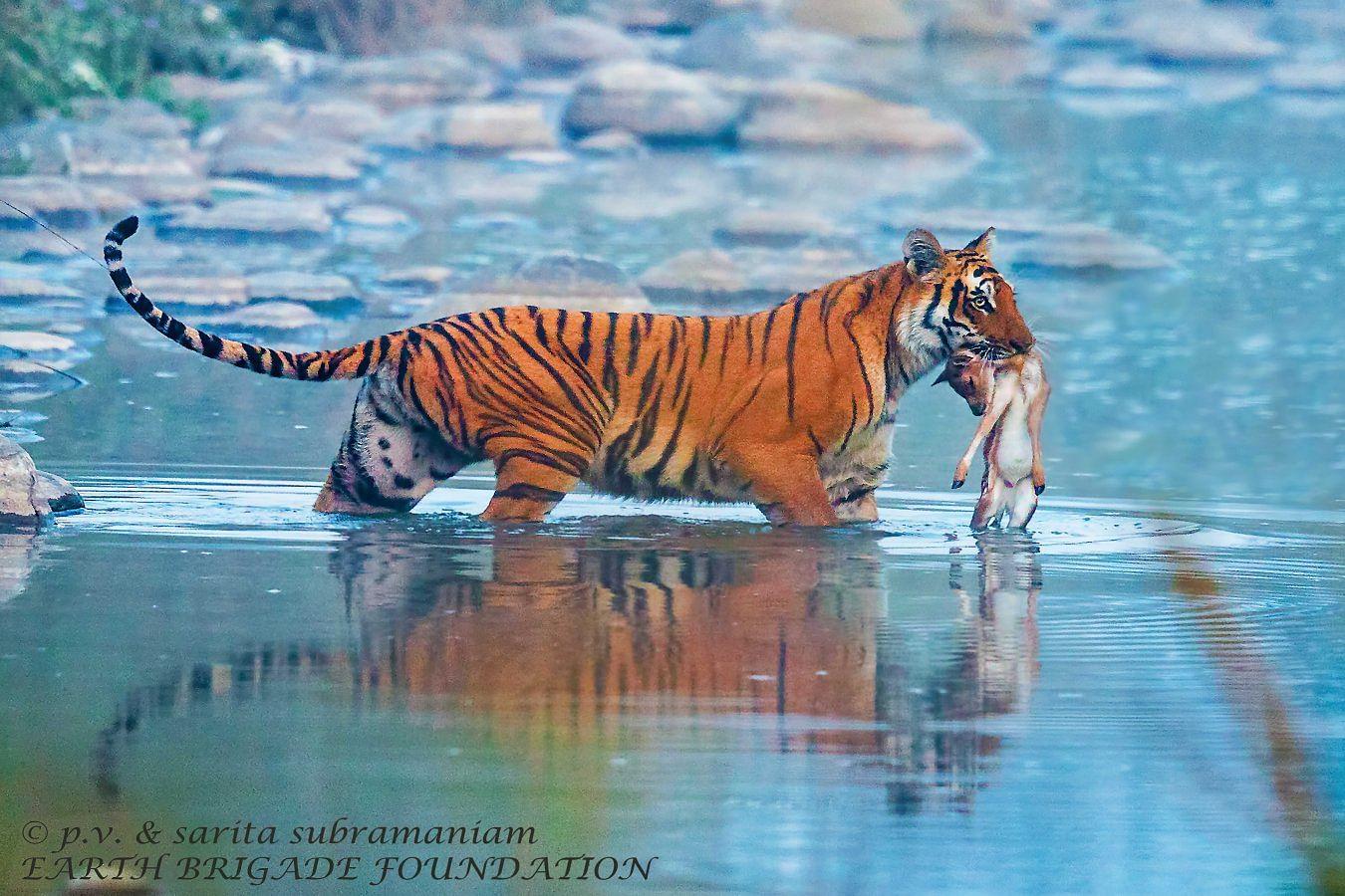 couple wildlife pictures