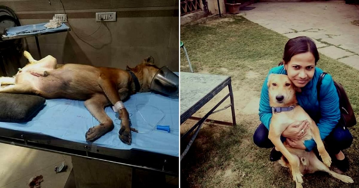 This 7-Month-Old Dog Was Going to Die. Until This Woman Did Something Incredible.