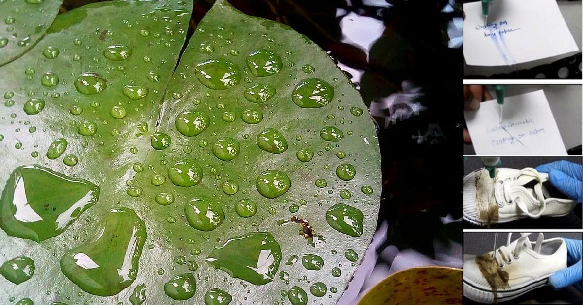 IIT Guwahati Folks Create Superhydrophobic Coating That Mimics Lotus Leaves!