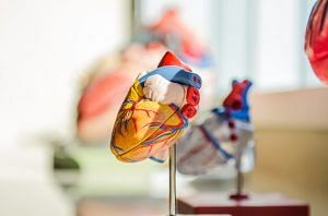 Muscles Anatomy Medical Doctor Nerves Heart Human. Representative image only. Image Courtesy: Maxpixel