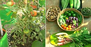 Starting with flowers, Indra Terrace Garden soon started growing vegetables. Image Courtesy: Indra Terrace Gardens