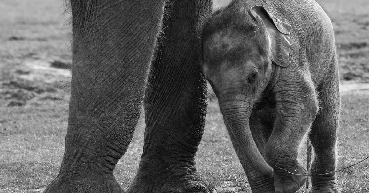 Video: Adorable Baby Elephant Is Saved, Thanks to the Quick Action of Forest Officials
