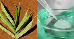 Guar based Hydrogel to improve soil fertility