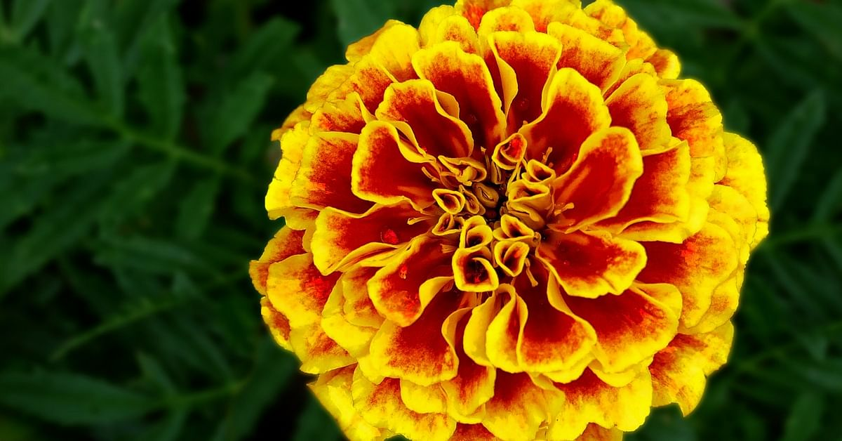 Flower power in your food 10 edible blooms that can electrify your dish mightylinksfo