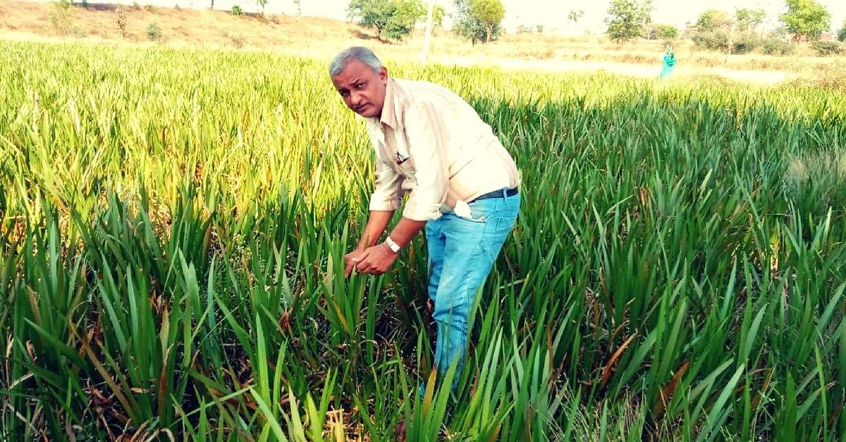 medicinal cultivation maharashtra farmer (1)