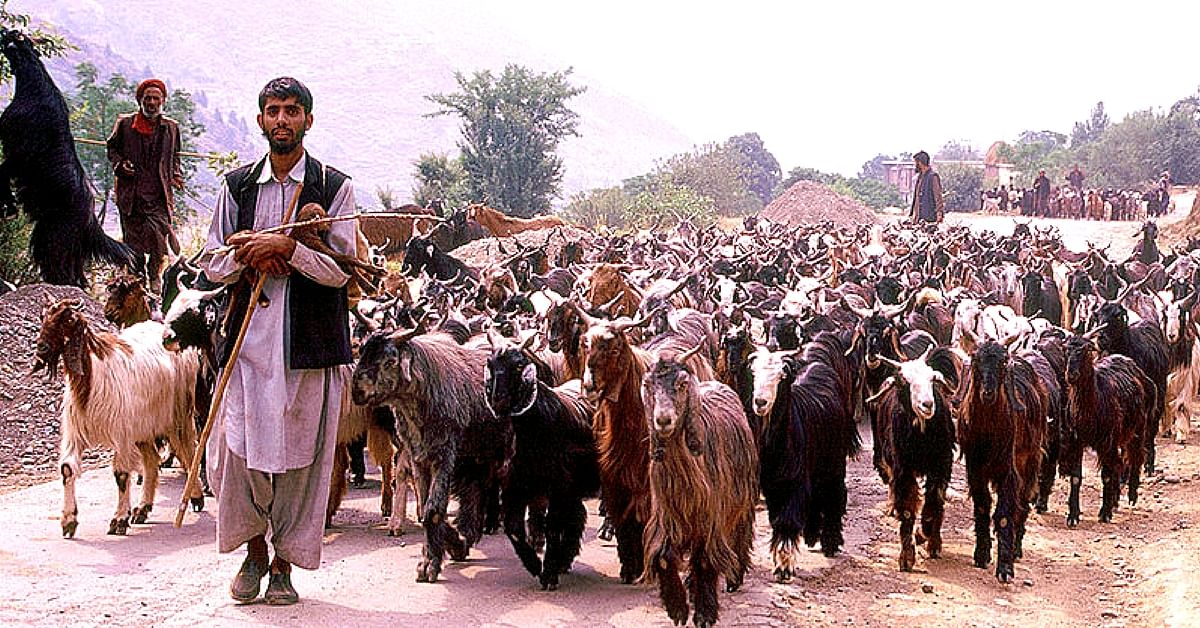 For the Bakherwal community in Kashmir, migration is a way of life.Representative image only. Image Courtesy: Wikimedia Commons.