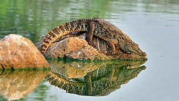 Mumbai Powai lake crocodile park