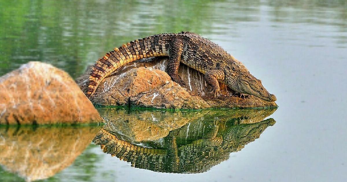 Mumbai Powai lake crocodile park