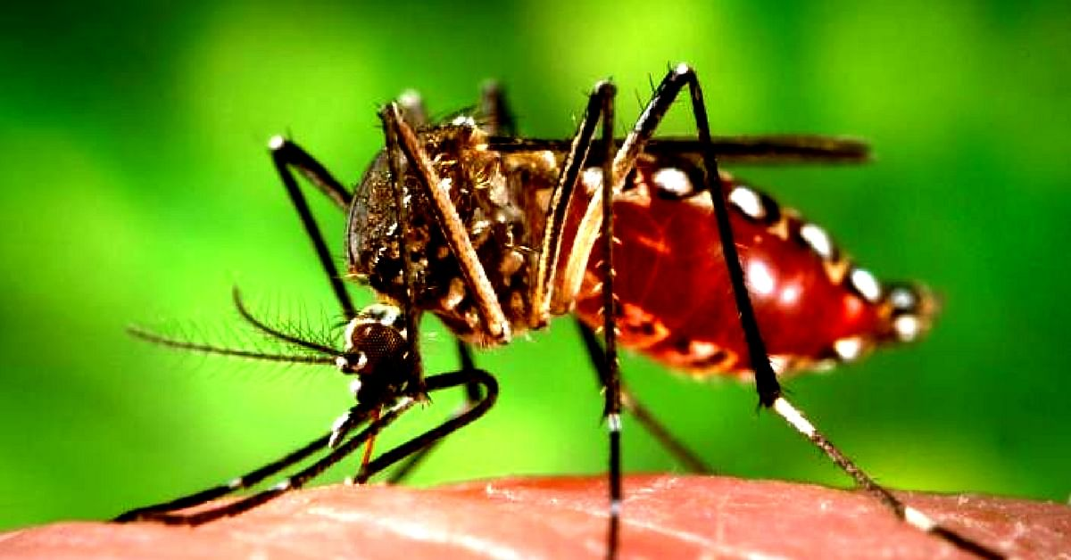 When it comes to dengue and chikungunya, early diagnosis is vital. Representative image only. Image Credit:Wikimedia Commons.
