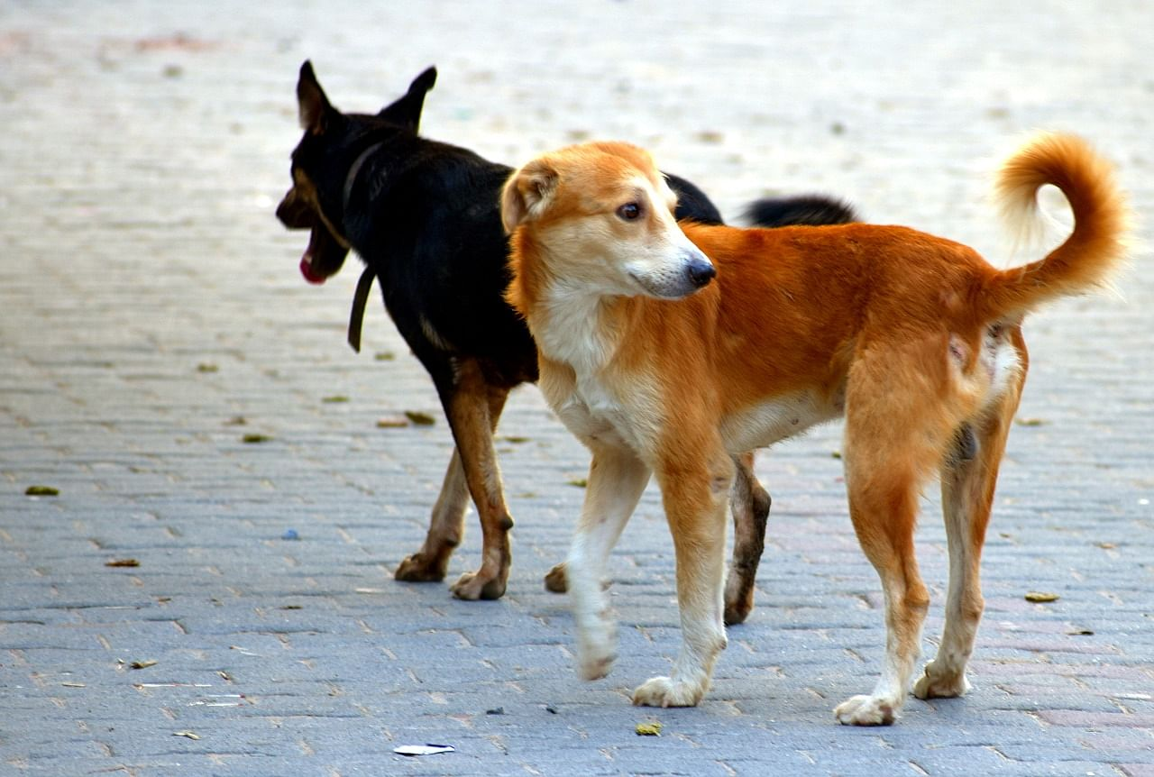 dogs crorepati gujarat
