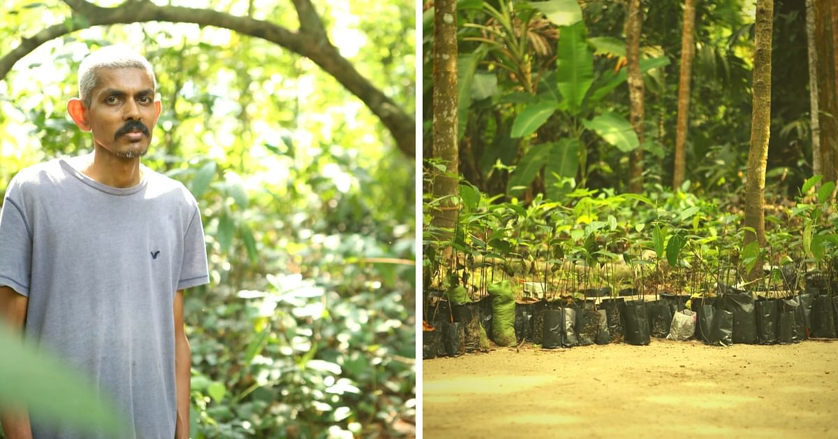 This Engineer Grew a Fruit Forest in His Backyard & You Can Grow One Too