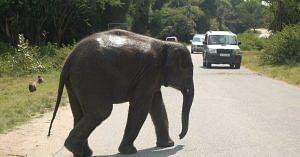 Road passing through Nagarhole. (Source: Facebook/Wayanad)