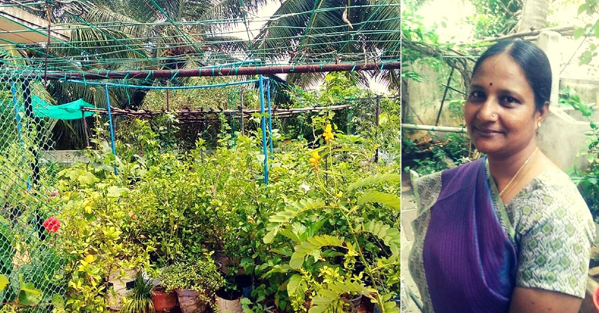 terrace gardening chennai