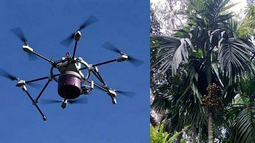 Drone betel nut plantation