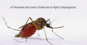 Mosquitoes are the major carrier of the the chikungunya virus