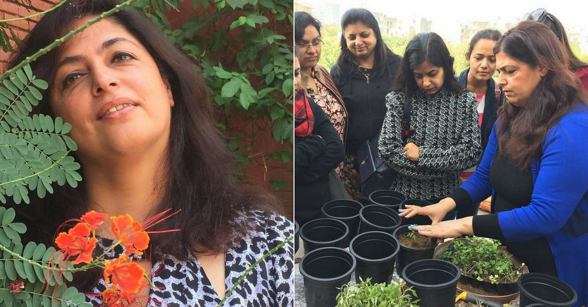 Plant Your Plate: Gurugram Lady Transforms Wasteland into Lush 'Edimental' Garden!