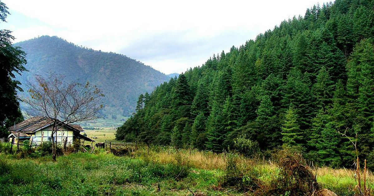 Get lost in nature, while you spend time in Dirang, Arunachal Pradesh. Image Credit: Anubhav Banerjee.
