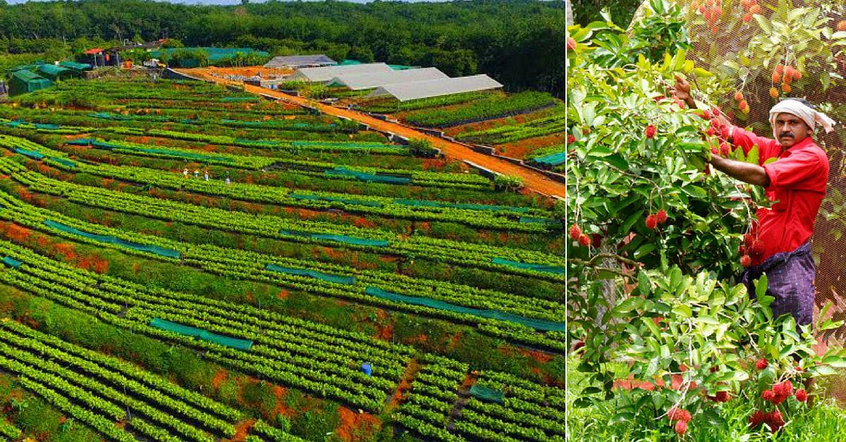 Santol to Cempadek: This Kerala Farm grows 32+ Varieties of