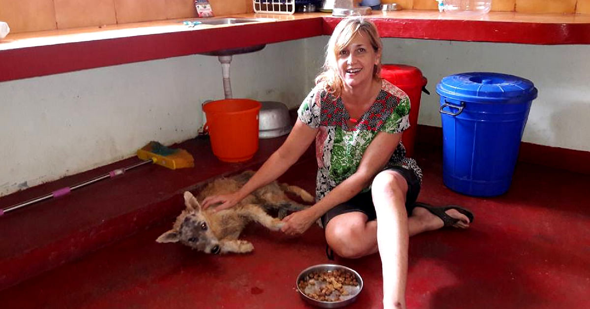 In Kovalam, Kerala, Steve and Mary founded the Street Dog Watch Association, in order to help the population of canines in the area. Image Credit: Street Dog Watch Association.