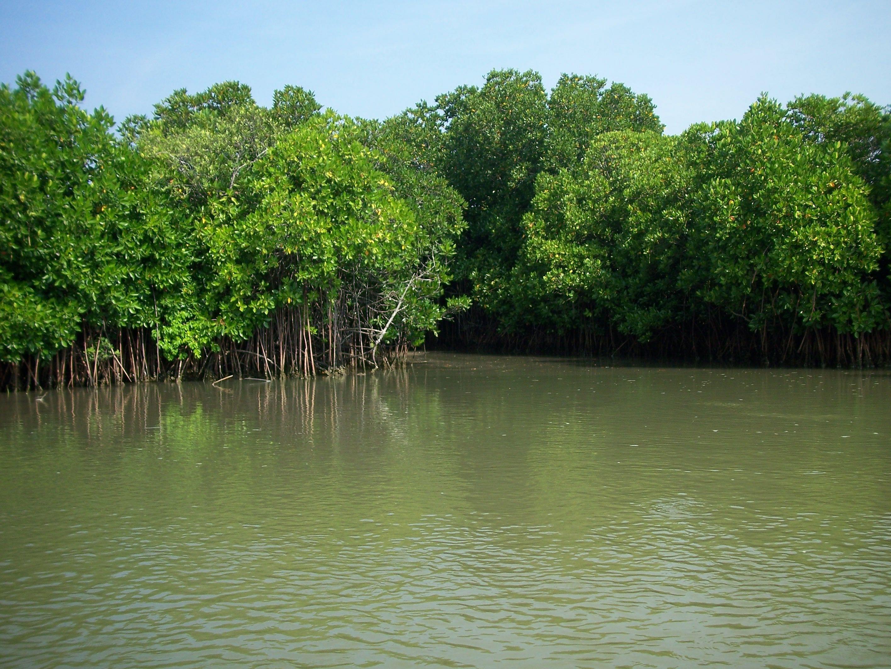 Mumbaikars Choose Mangroves Over Malad Sewage Treatment Plant  Mumbaikars Choo...