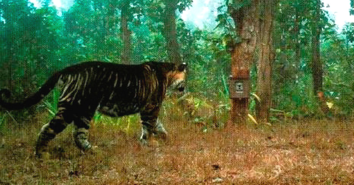 You Know Black Panthers. But Have You Ever Heard of Odisha's Black Tigers?