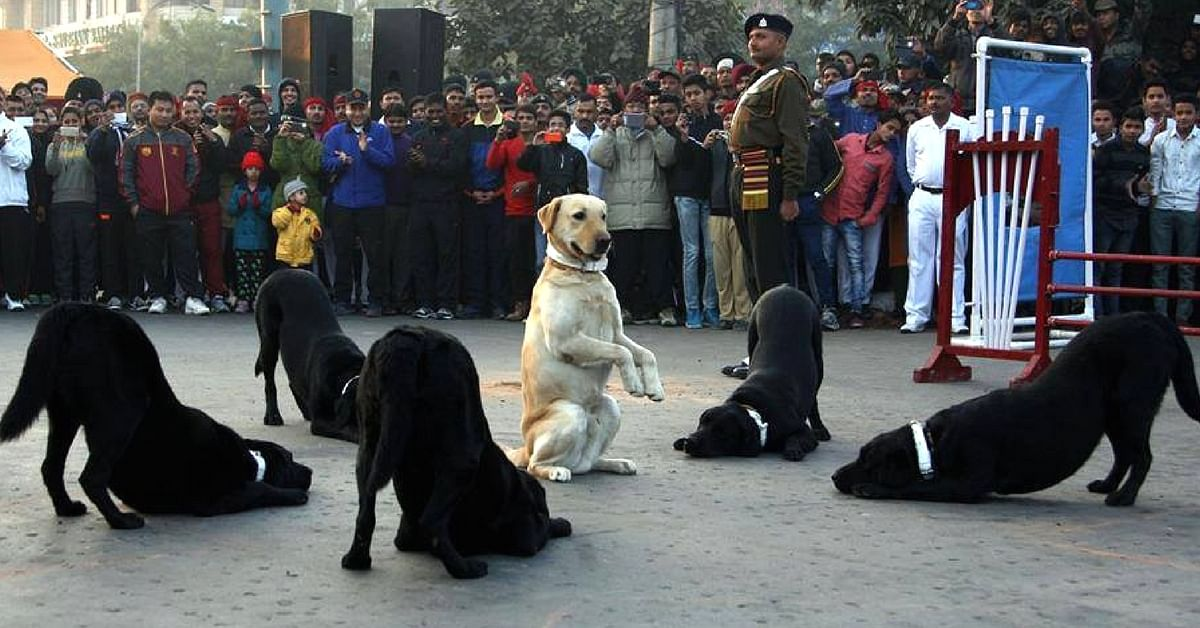 Adopt an army dog & take home a national hero! This woman tells you how