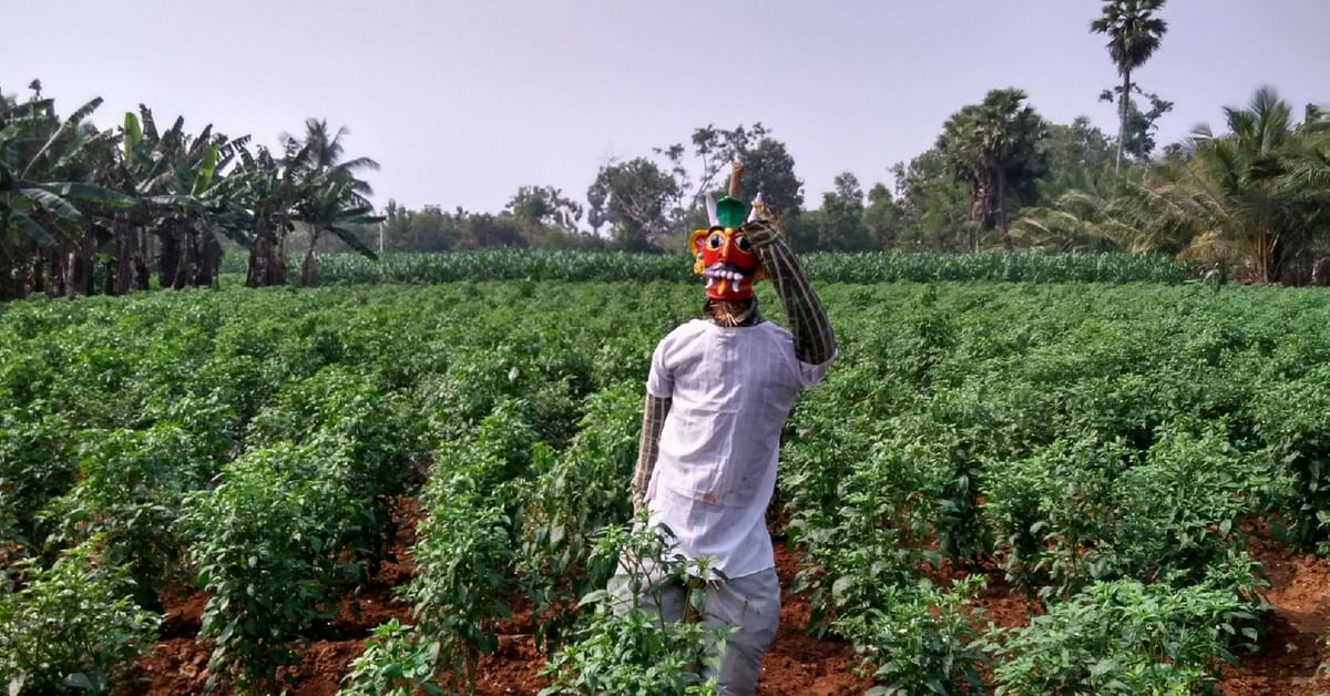 Going Organic Against All Odds, Telangana District Sets Precedent for South India!