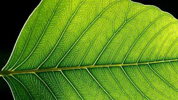 Artificial photosynthesis by artificial leaf developed by IISc Scientists