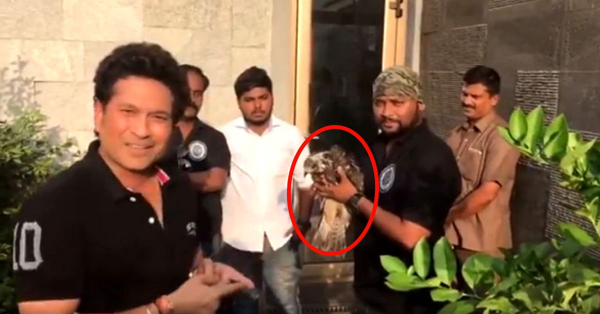 Video: Sachin Tendulkar Rescues & Feeds Injured Bird That Flew Into His Balcony!