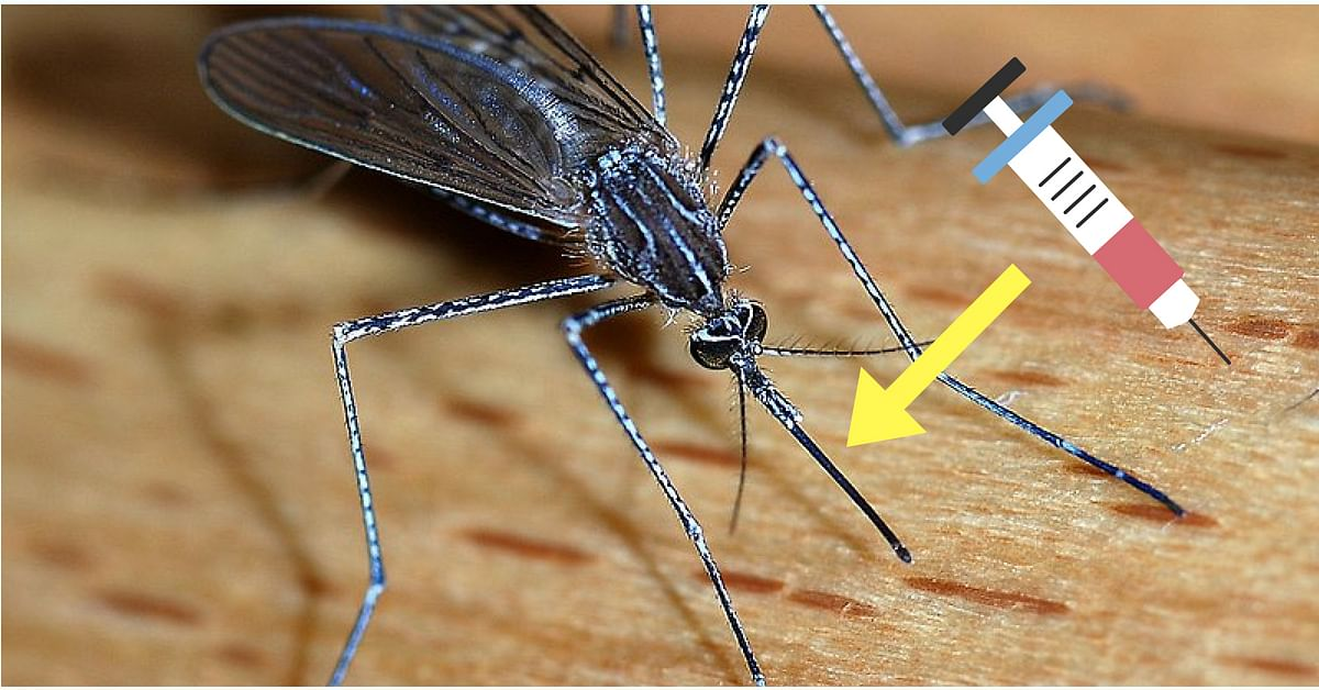 IITans develop technology for painless injection biomicking mosquitoes
