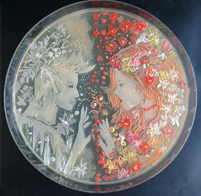 Agar microbe culture art science