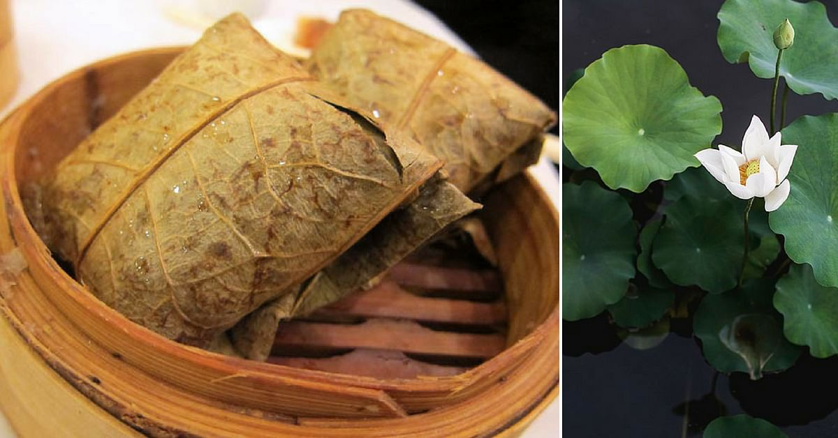 Native Indian Leaves You Can Eat From 5