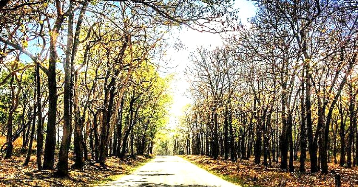 Drive through India's Bandipur Tiger Reserve, on butter-smooth roads.Image Credit: Raji Pandiyaraj