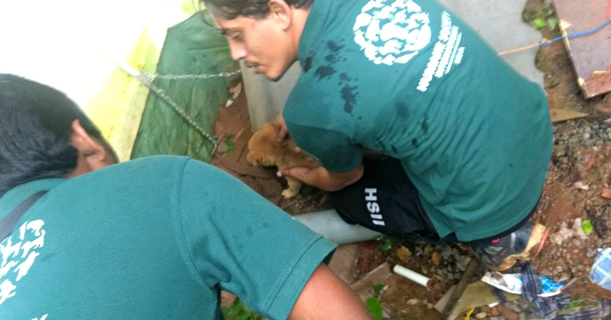 In Kerala, HSI volunteers worked on ground zero, to help stranded animals. Image Credit: HSI