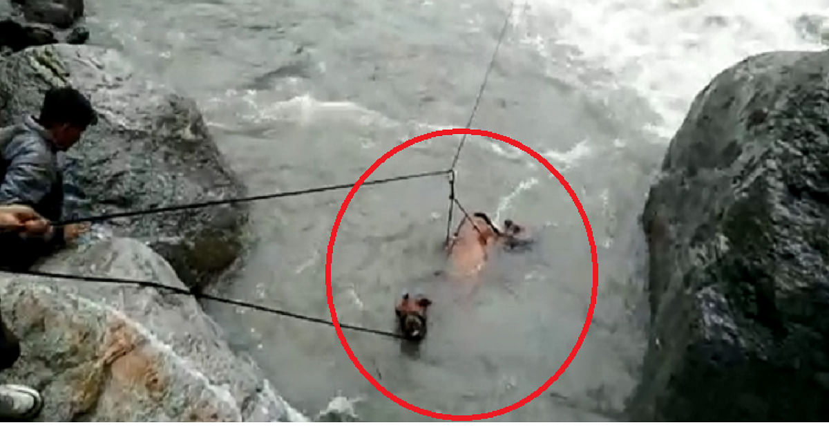 Watch: Swept Away By Raging River, Drowning Horse Rescued By Uttarakhand Officials!