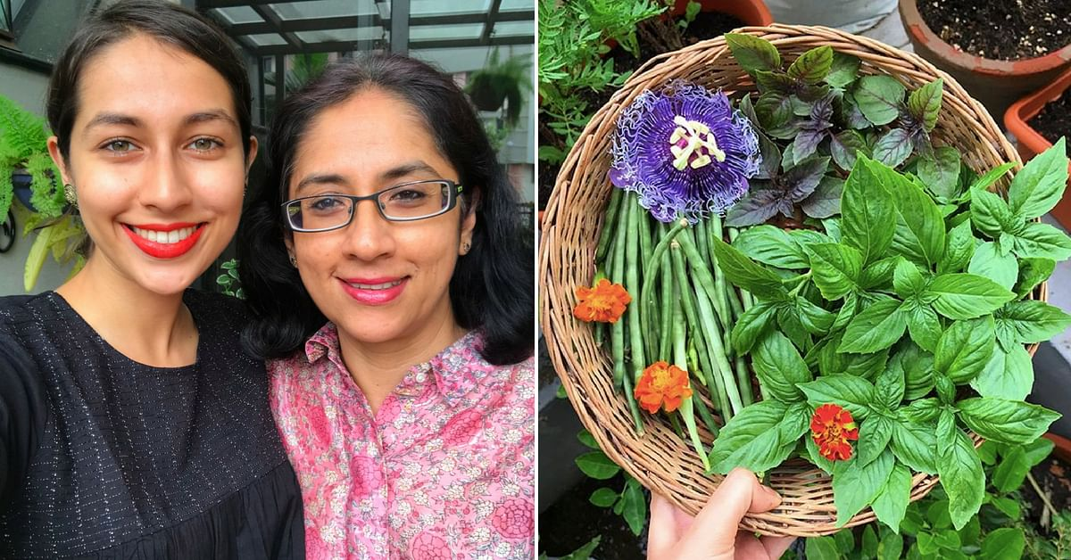 From 6 Types of Basil to Passion Fruit, Kochi Woman's Edible Garden Has It All!