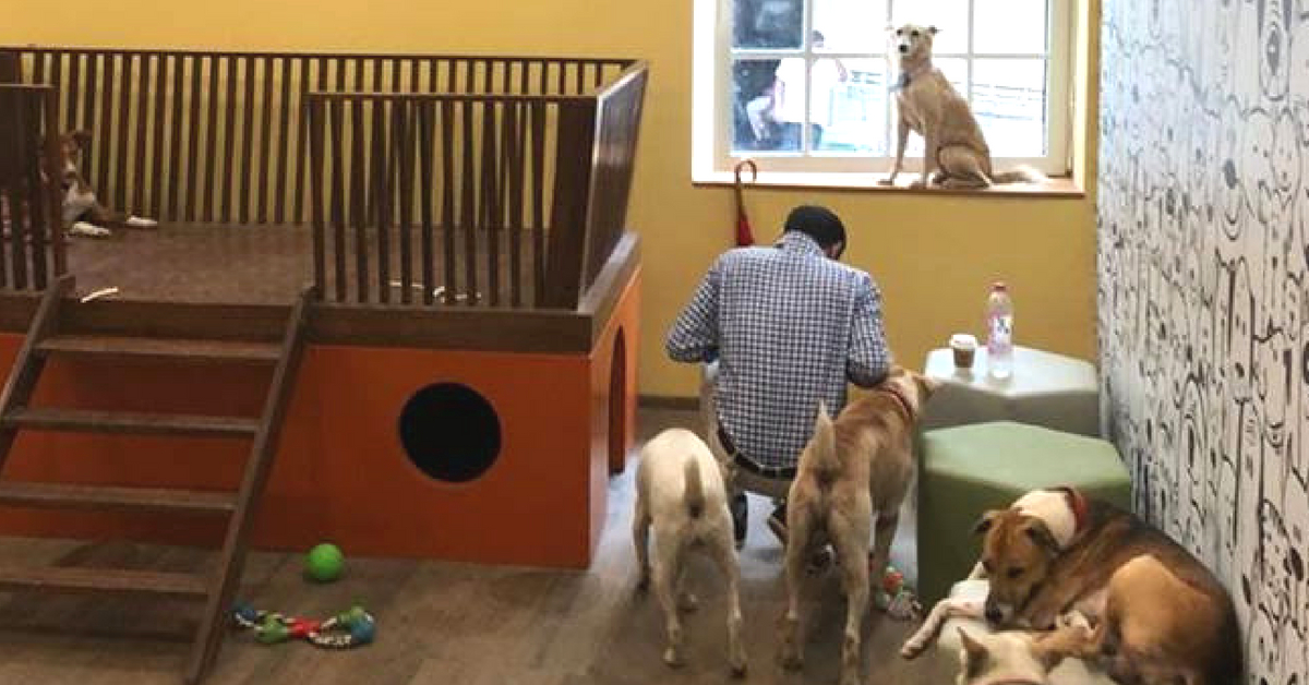 Heartwarming! Tata's Bombay House Give Stray Dogs a Swanky Room of Their Own!