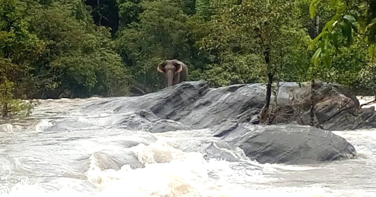 The elephant in Kerala was stranded on a rock. Photo Source.
