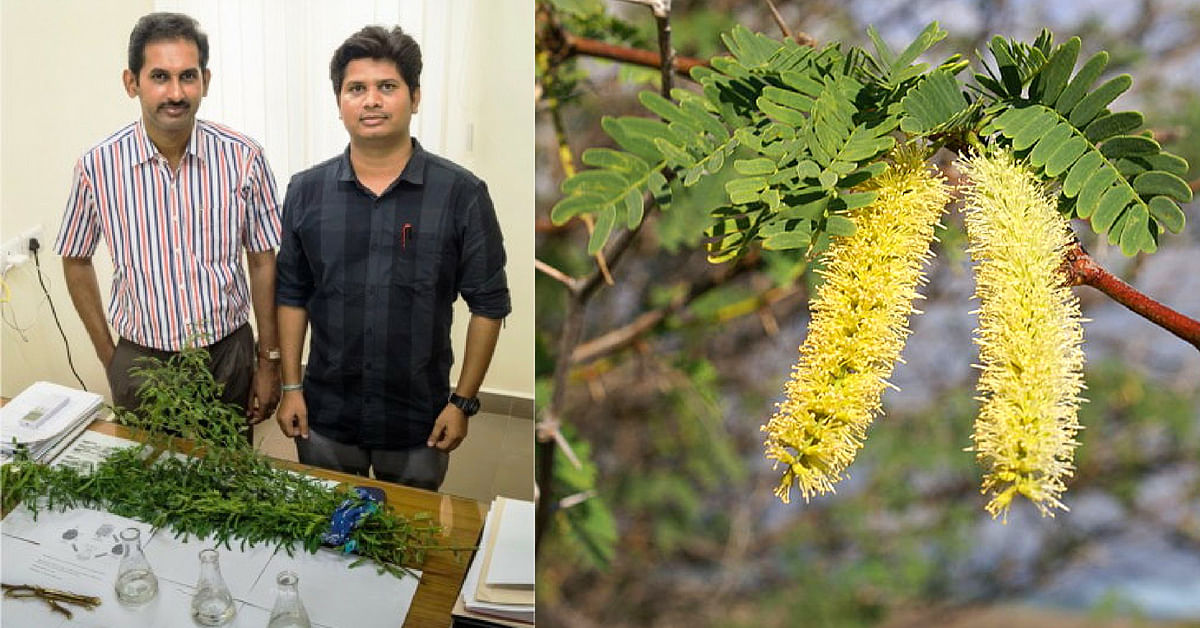 Weed That Treats Polluted Water? IIT-M Develops Low-Cost Way To Remove Toxins!