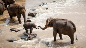 Indian Railways Scheme Saves Elephant Lives