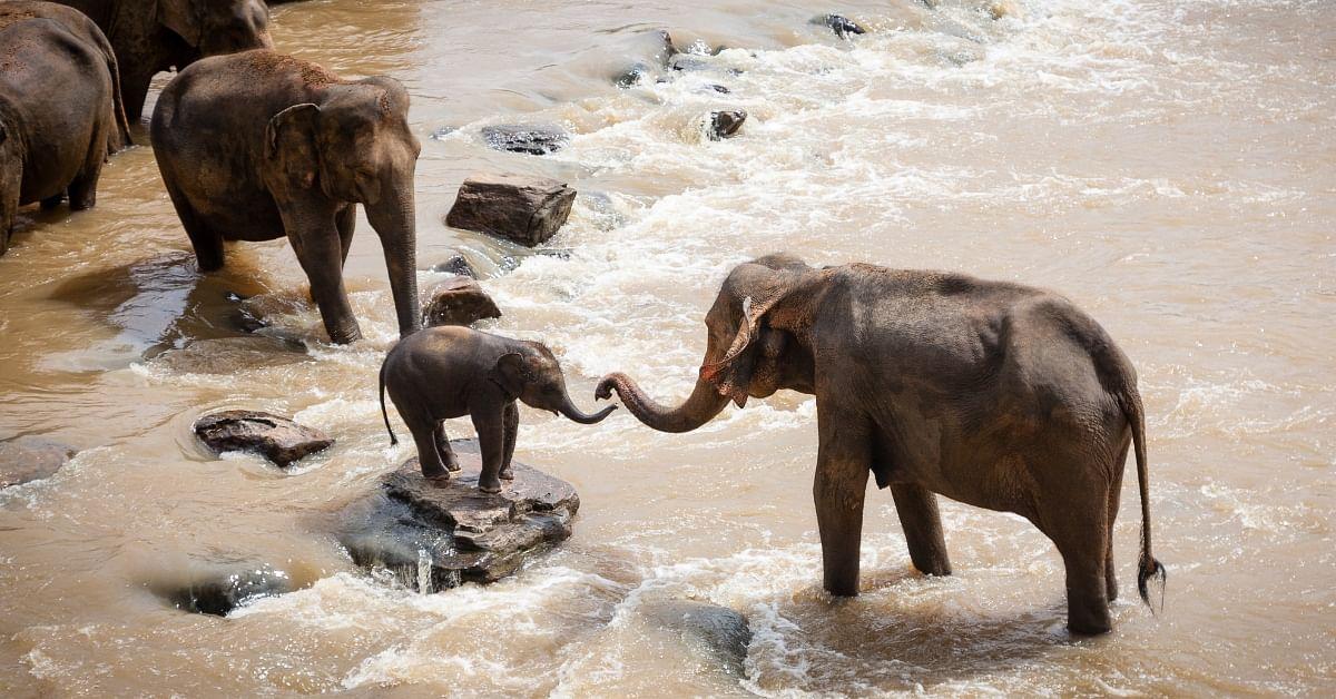 Indian Railways Scheme Saves Elephant Lives