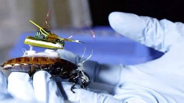 Cyborg Cockroach of the future