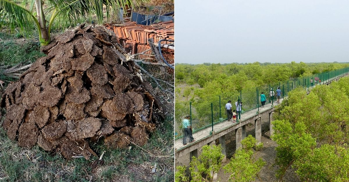 Experts from Europe Set to Bring Electricity to Bengal's Sundarbans Using Cow Dung!