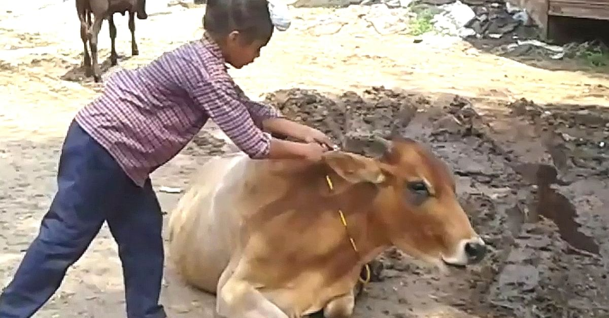 How To Protect Cattle From Vehicles? Class 5 Students Have An Enlightening Solution